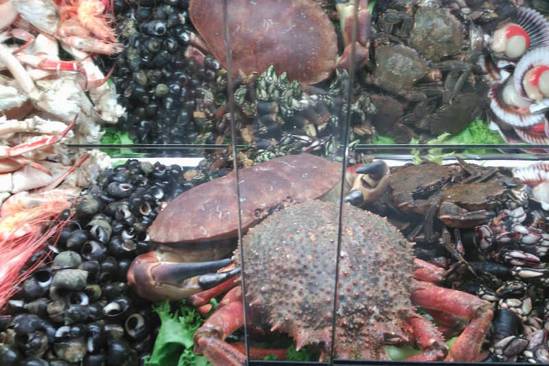 Bocateria Tejota. marisco y tapas con vino dop yecla